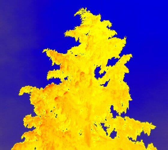 high resolution infrared image of a fir tree
